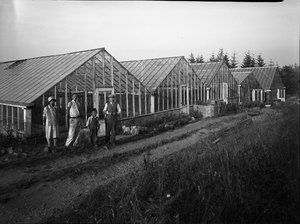 Yamada Greenhouse
